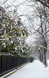 Plants on the Champ de Mars covered with snow Royalty Free Stock Photos