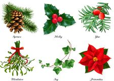 Free Plants, Christmas Decorations. Spruce, Holly, Yew, Mistletoe, Ivy, Poinsettia. 3d Realistic Vector Set Royalty Free Stock Photo - 159188915
