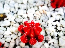 Plants closeups macro shots viberants stock image