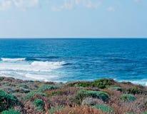 Plants on the coast. Of Porto Palmas Royalty Free Stock Image
