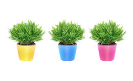 Plants in colorful pots Stock Photo