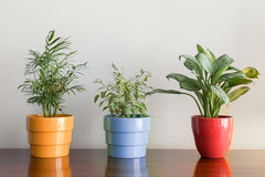 Plants on colorful pots Royalty Free Stock Photography