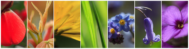 The plants in the colors of the rainbow Stock Photos