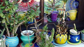 Plants in Colourful Pots, Greek Island Stock Photography