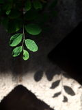 Plants in concrete blocks Royalty Free Stock Photo