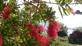 Plants of Corfu 2. Plants of Corfu Stock Photo