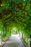 Plants corridor royalty free stock images