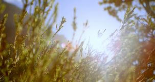 Plants in countryside 4k. Close-up of plants in countryside 4k stock footage