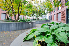 Plants in a courtyard. Plants in concrete flower bed in a courtyard Royalty Free Stock Image