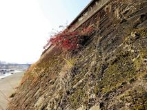 Concrete river bank along the Kuma River stock photos