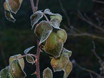 Plants covered with frost, southern Bohemia. Czech Republic Royalty Free Stock Photo
