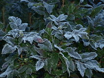 Plants covered with frost, southern Bohemia. Czech Republic Royalty Free Stock Images