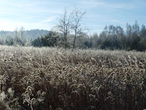 Plants covered with frost, southern Bohemia. Czech Republic Stock Photos