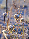 Plants covered in hoar frost. During sunrise Stock Photo