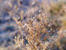 Plants covered in hoar frost. During sunrise Royalty Free Stock Photos