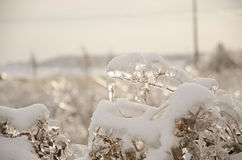Plants covered in ice. Some plants covered in ice after an ice storm Royalty Free Stock Photo