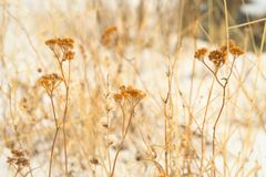 Plants covered by the snow Royalty Free Stock Image