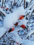 plants covered with snow Stock Photos
