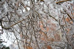 Plants in the ice. The plants are covered with a thick layer of ice after the rain and frost Royalty Free Stock Image