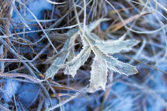 Plants covered with winer rime Stock Photo