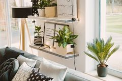 Plants in cozy living room. High angle of plants and lights on shelves in cozy living room interior with patterned cushions royalty free stock images