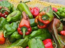 Plants Of Cuba Stock Image