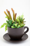 Plants in a cup. (spring concept Stock Image