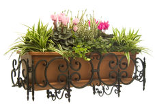 Plants and cyclamen pot in wrought iron hanger. Wrought Iron Hanger (balcony stand) with a flowerpot Royalty Free Stock Images