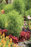 Plants of decorative flowerbed in summer day Stock Photography