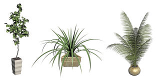 Plants in decorative pots Royalty Free Stock Image