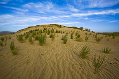 Plants in desert Royalty Free Stock Photography
