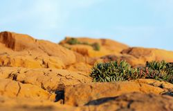 Plants in the desert on the rocks Royalty Free Stock Photos