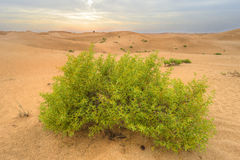 Plants in desert Stock Images