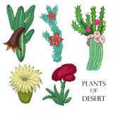Plants of desert Stock Photography