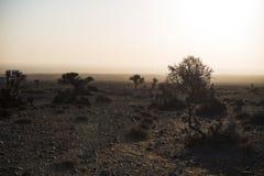 Shrub of desert. The plants in the desert.In the winter morning Royalty Free Stock Image