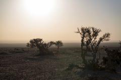 Shrub of desert. The plants in the desert.In the winter morning Stock Images