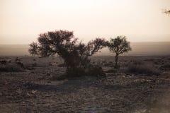 Shrub of desert. The plants in the desert.In the winter morning Stock Image