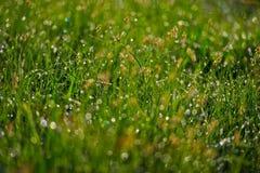 Plants and dew Stock Photo