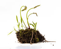 Plants and Dirt in Studio Royalty Free Stock Images