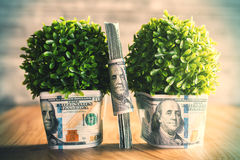 Plants with dollars Stock Images