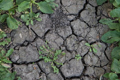 Plants in drought Stock Images