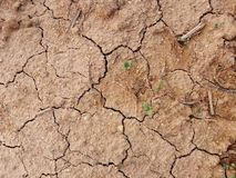 Plants in dry soil. Picture of plants in dry soil stock photos