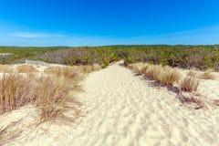 Plants of Dune of Pyla, Arcachon Bay Royalty Free Stock Image