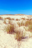 Plants of Dune of Pyla, Arcachon Bay Royalty Free Stock Photography