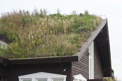 Plants on the ecological  rooftop. Plants on the ecological rooftop- green roof Stock Photo