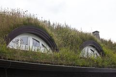 Plants on the ecological  rooftop Stock Images
