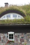 Plants on the ecological  rooftop. Plants on the ecological rooftop- green roof Stock Images