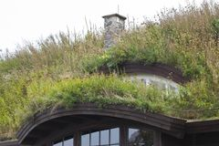 Plants on the ecological  rooftop. Plants on the ecological rooftop- green roof Stock Photography