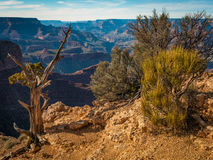 Plants on the edge of Grand Canyon Royalty Free Stock Photos