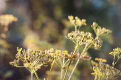 Plants in evening golden light Stock Photos